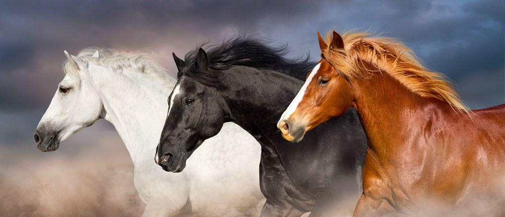 bracelets crins cheval hérault